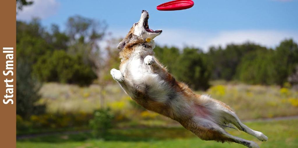 Start Small-How To Teach A Dog To Catch A Frisbee